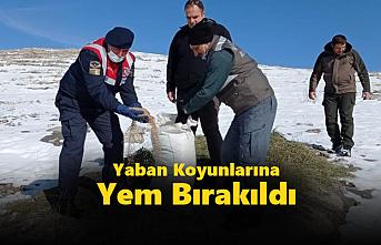 Konya'da Yaban Koyunlarına Yem Bırakıldı...
