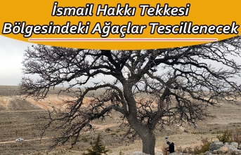 İsmail Hakkı Tekkesi Bölgesindeki Ağaçlar Tescillenecek