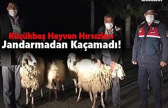 Karaman'da Küçükbaş Hayvan Hırsızları Jandarmadan...