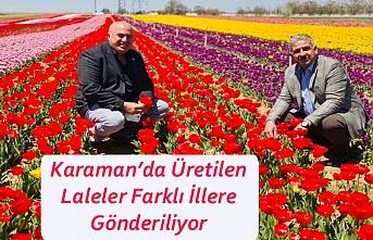 Karaman'da Üretilen Laleler Farklı İllere Gönderiliyor