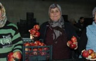100 Bin Ton Elma Sofralari Süslemeyi Bekliyor