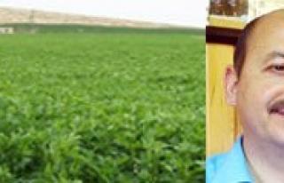 2012 Yili Yem Bitkileri Destegi Basvurulari Sürüyor