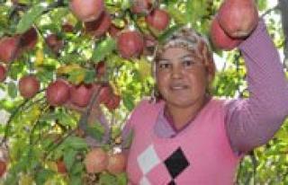 Elmaya Ilk Talep Kuzey Irak ve Ukrayna'dan