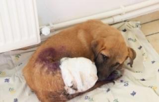 Yavru Köpekler Duyarlı Vatandaşlar Sayesinde Ölmekten...