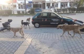 Mut'ta Başıboş Gezen Köpeklerin Sorumlusu Olarak...