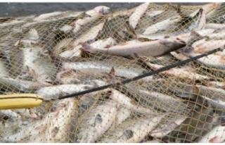 Tezgâhlar Balık Bekliyor