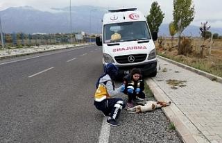 Konya'da 112 Çalışanları 'Paşa'...