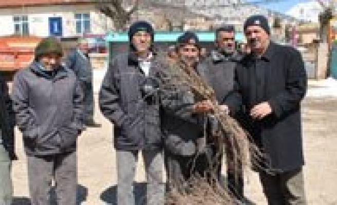 Çiftçilere 61 Bin Asili Bag Çubugu Dagitildi