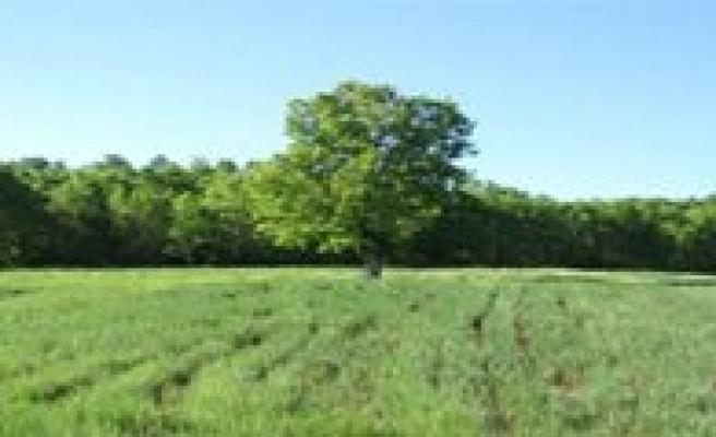 Karaman'da 534 Hektar 2/B Kapsamina Giren Arazi Var
