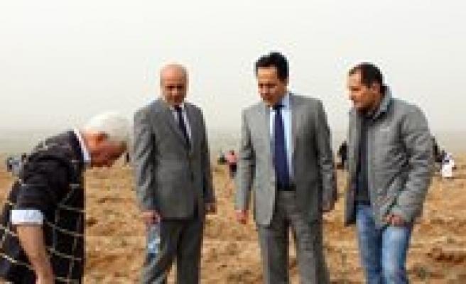 Ayranci Ilçesinde Bin 200 Fidan Toprakla Bulusturuldu