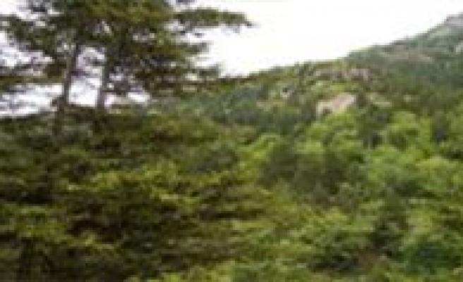 Ormanlik Alanda Kaybolan 2 Yasindaki Çocuk Bulundu