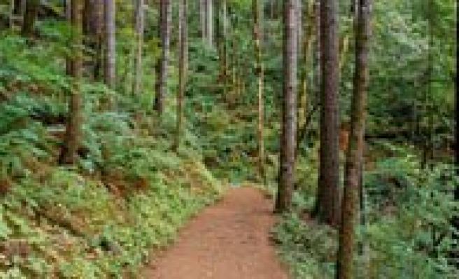 Kayip Yasli Kadinin Cesedi Ormanlik Alanda Bulundu