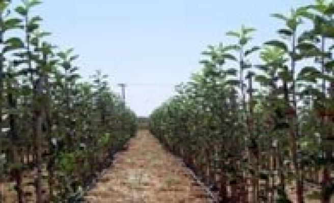 % 50 Il Özel Idare Destekli Meyve Fidani Verilecek