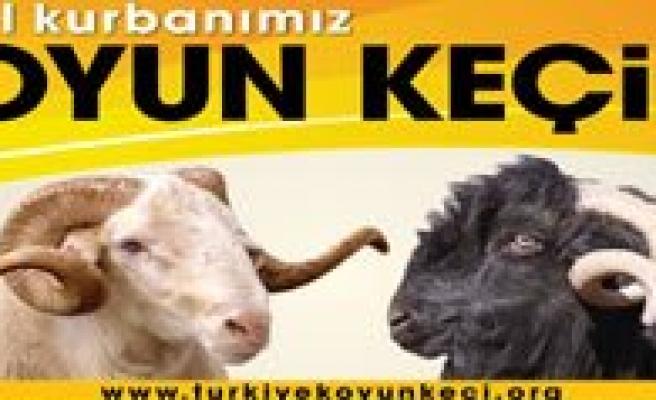DKKY Birligi Baskani Osman Yesiltas: Bayram Için Ihtiyaç Fazlasi Kadar Kurbanlik Küçükbas Hayvanimiz Var