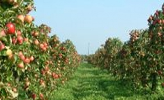 Elma Üretiminde Birinci Isparta, Karaman Ikinci, Antalya Üçüncü