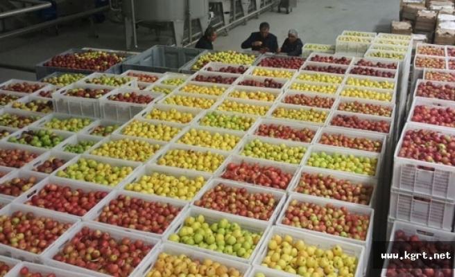 Konuk: Torku Bayraktar Olacak, Elma Üreticisi Dış Pazarlardan Pay Alacak