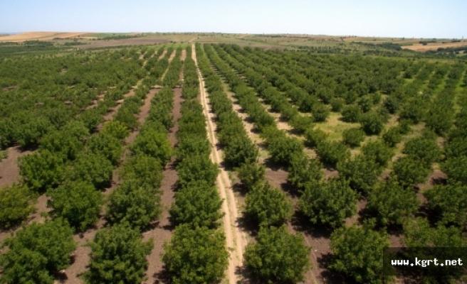 2016 Yılında Karaman'da 8 Milyon 247 Bin Adet Fidanı Toprakla Buluştu