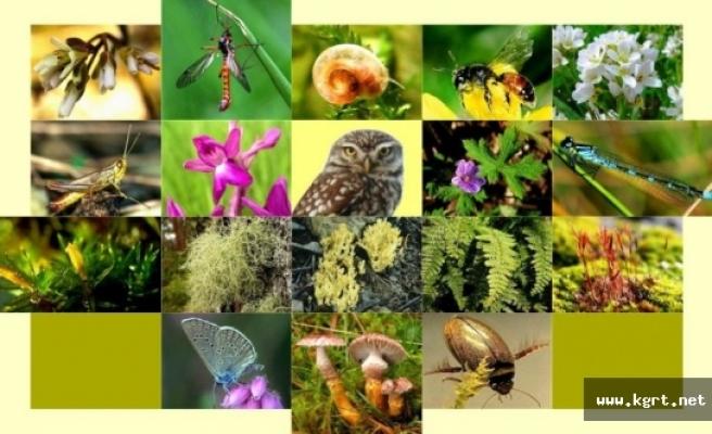 Biyolojik Çeşitlilik Envanter Ve İzleme Projesi Çalıştayı Yarın