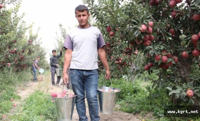 Karaman'da Elma, Soğuk Hava Depolarına Girmeye Başladı