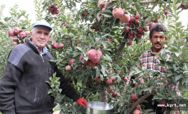 Karaman'da Hasadı Başlayan Elma Yüz Güldürüyor