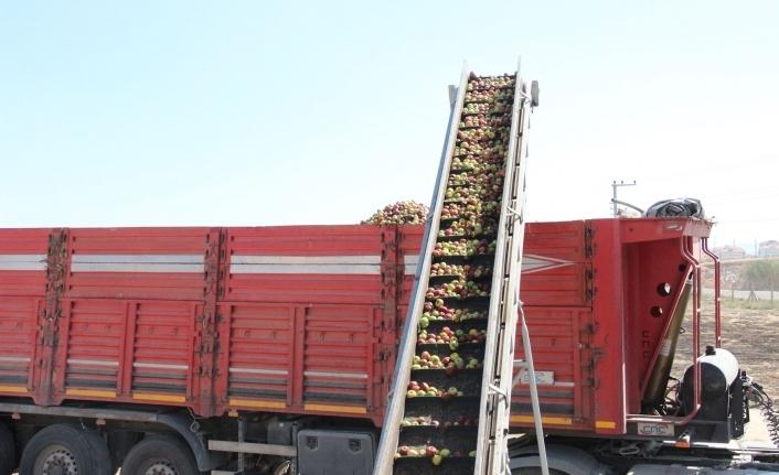 Karaman'da Iskarta Elma Alım Fiyatları Yüz Güldürüyor